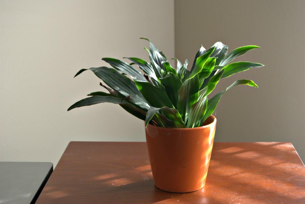 orangepotplant.jpg