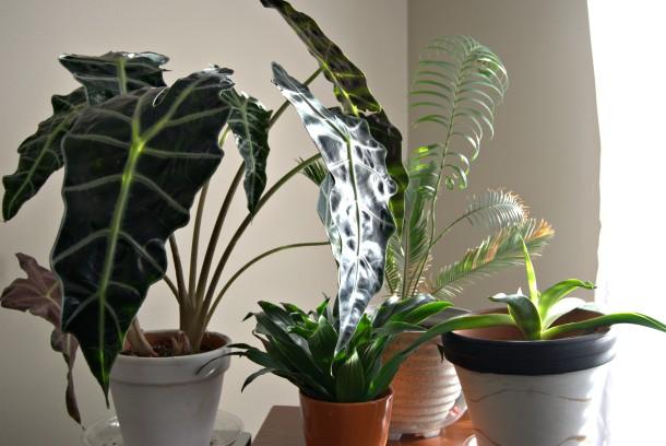 plantsall
